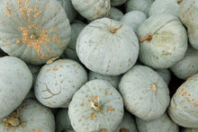 Load image into Gallery viewer, Squash - Blue Hubbard