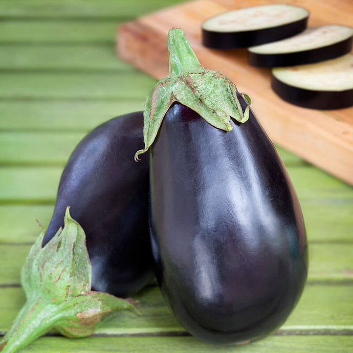 Eggplant - Black Beauty (Plant)