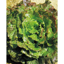 Load image into Gallery viewer, Canasta Lettuce