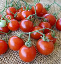 Load image into Gallery viewer, Cherry Tomato - Punta Banda