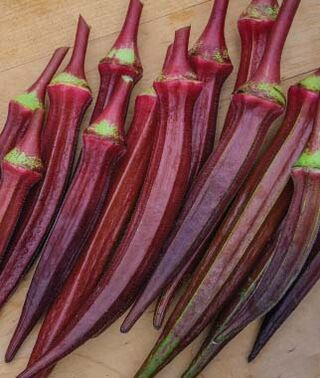 Okra - Red Burgundy