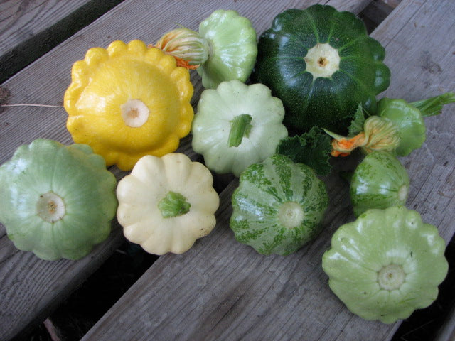 Squash - Scallop/Patty Pan