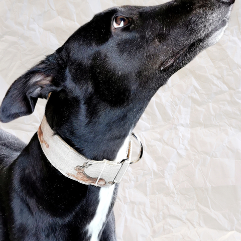 Martingale Collar for Greyhounds by Seaside Greyhounds