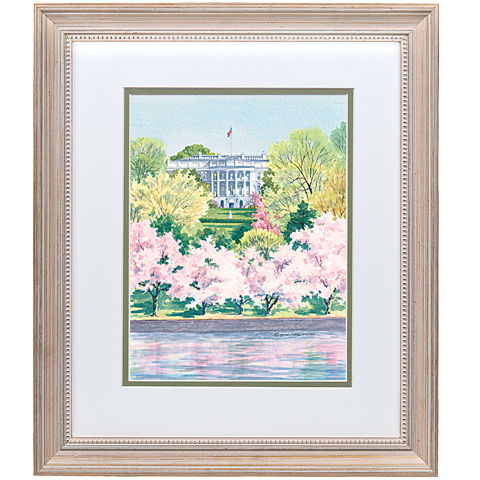 A View of the White House with Cherry Blossoms