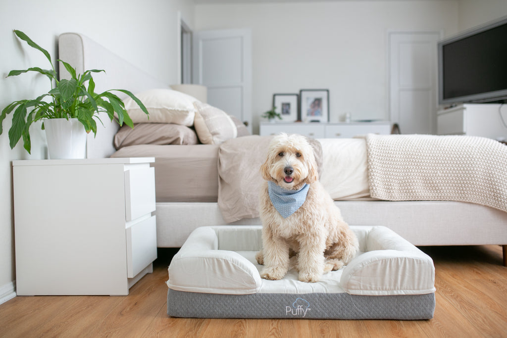 Why The Puffy Dog Bed Is Perfect For Your Pup