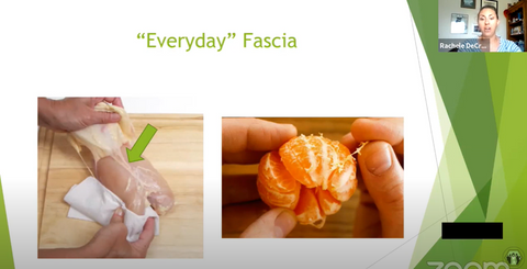 Everyday Fascia is the white stuff in the raw chicken between the skin and meat. And the white stuff in an orange when you peel it off.