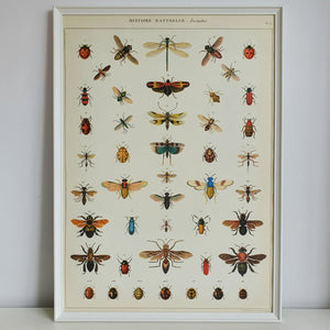 Insect Chart