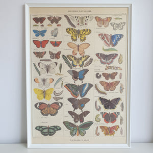 French Butterflies Nature Chart Vintage