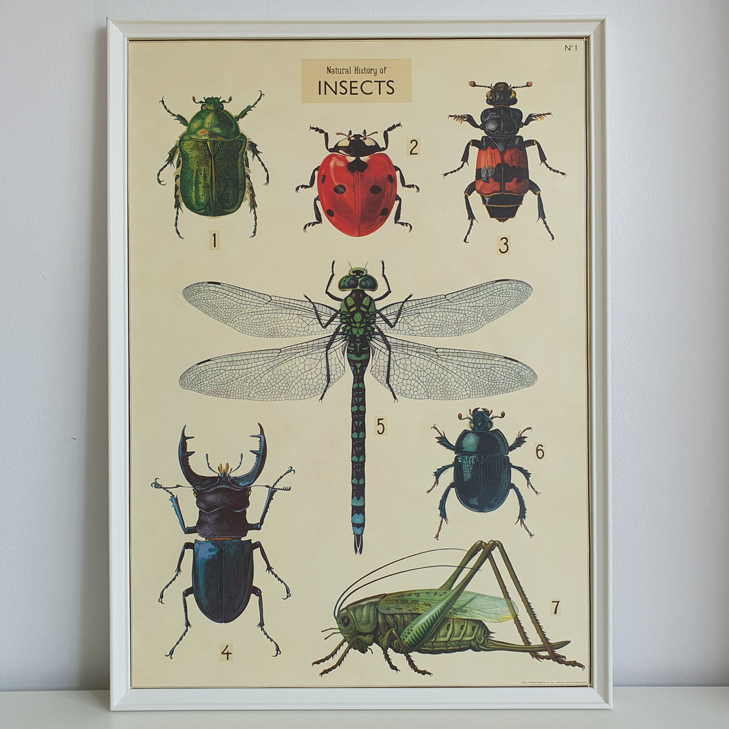 Insects Scientific Chart