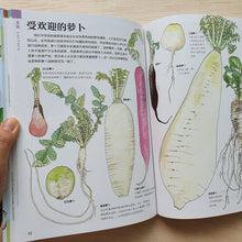 Load image into Gallery viewer, 蔬菜的植物学