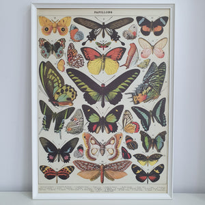 Butterfly Chart French