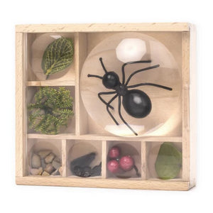 Magnifying Bug Box (Restocks End July)
