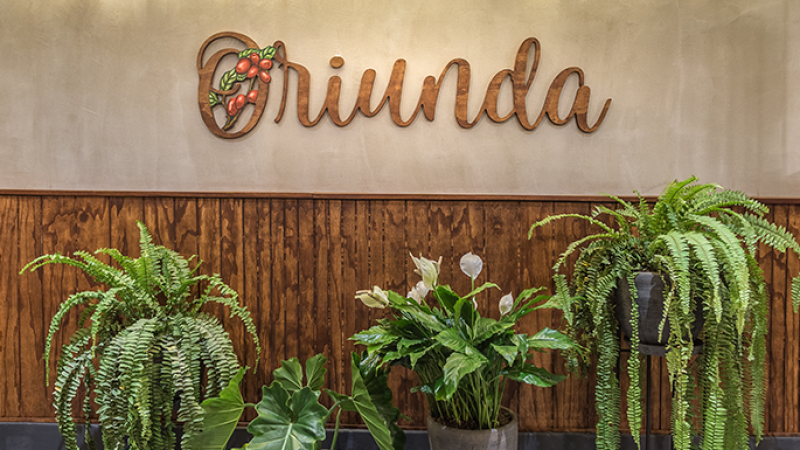 Coffee bar Oriunda logo with green plants in front of it.