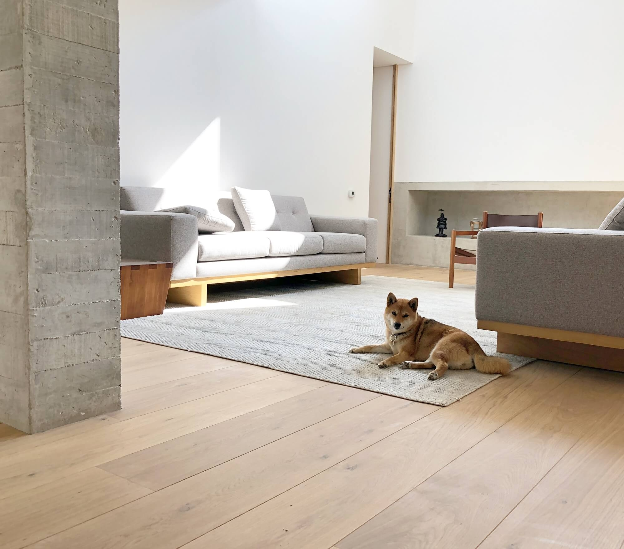A dog laying on a rug in the middle of a living room with wide plank hardwood floors.