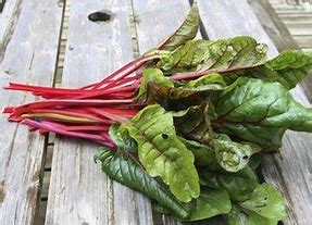 Swiss Chard - red stems
