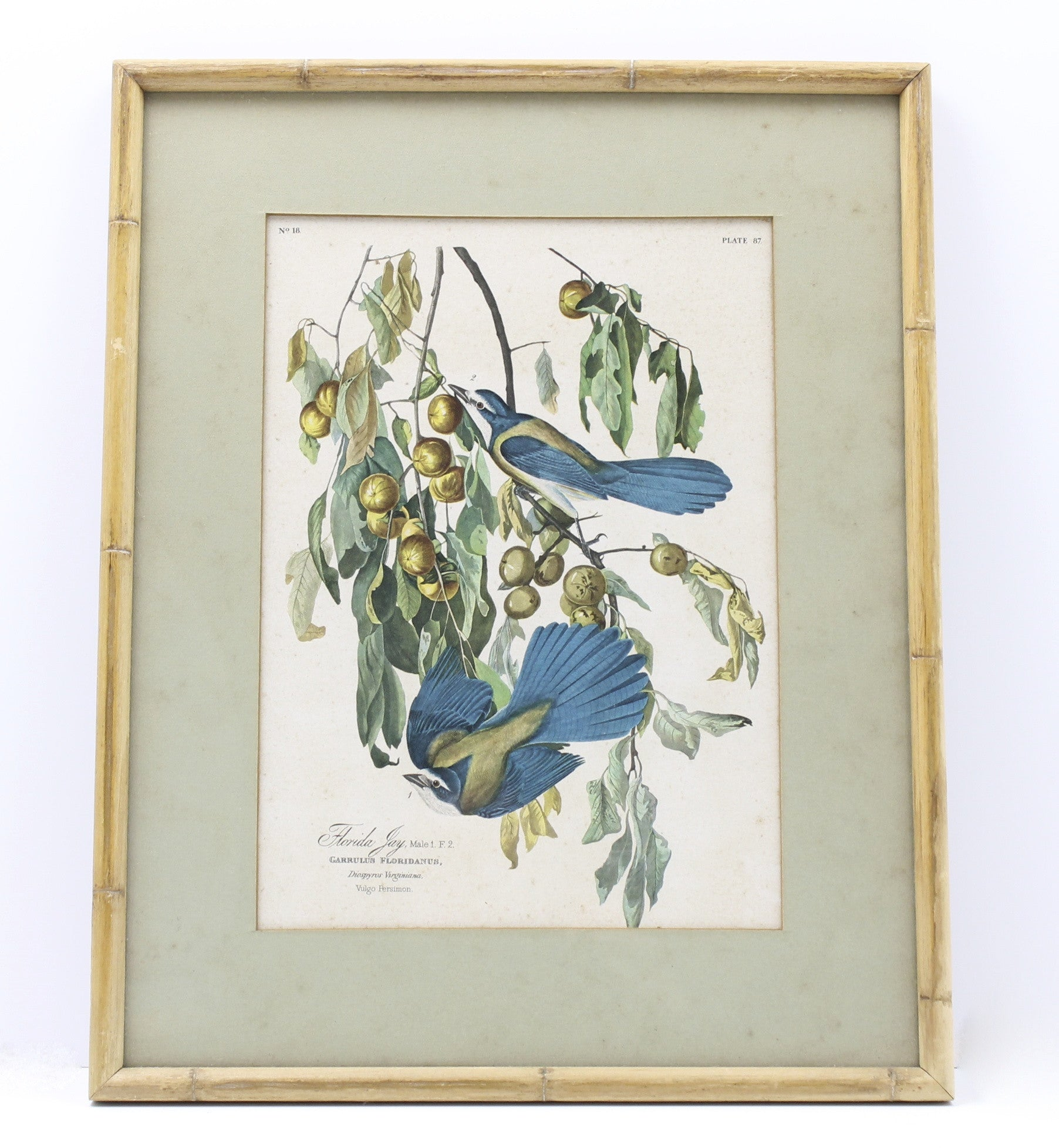 Florida Jay National Audubon Society Numbered Print