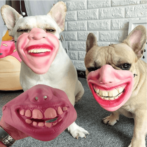Halloween-masks-for-dogs-animals-trendy-halloween-masks