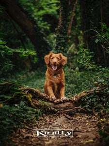 Tick Check! How To Avoid Ticks & The Diseases They Carry