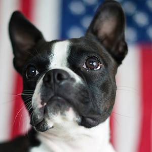 Made In The USA | Natural & Organic Pet Products