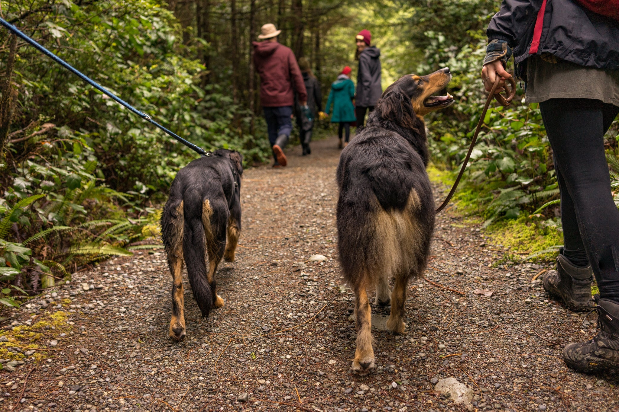 What Flea Control Products Are Actually Safe?