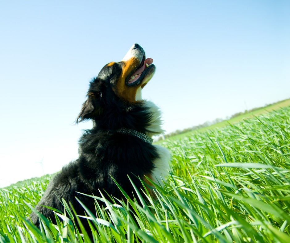 A Happy Dog in the Grass