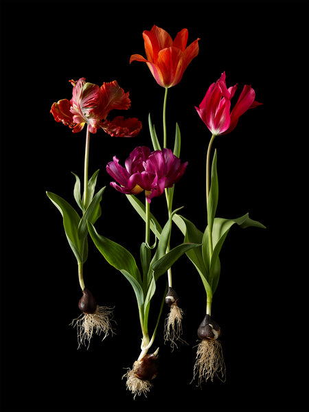 Kevin Dutton flower photographs