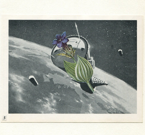 Vesna Vrdoljak -Flower in Space #3 - Original Collage
