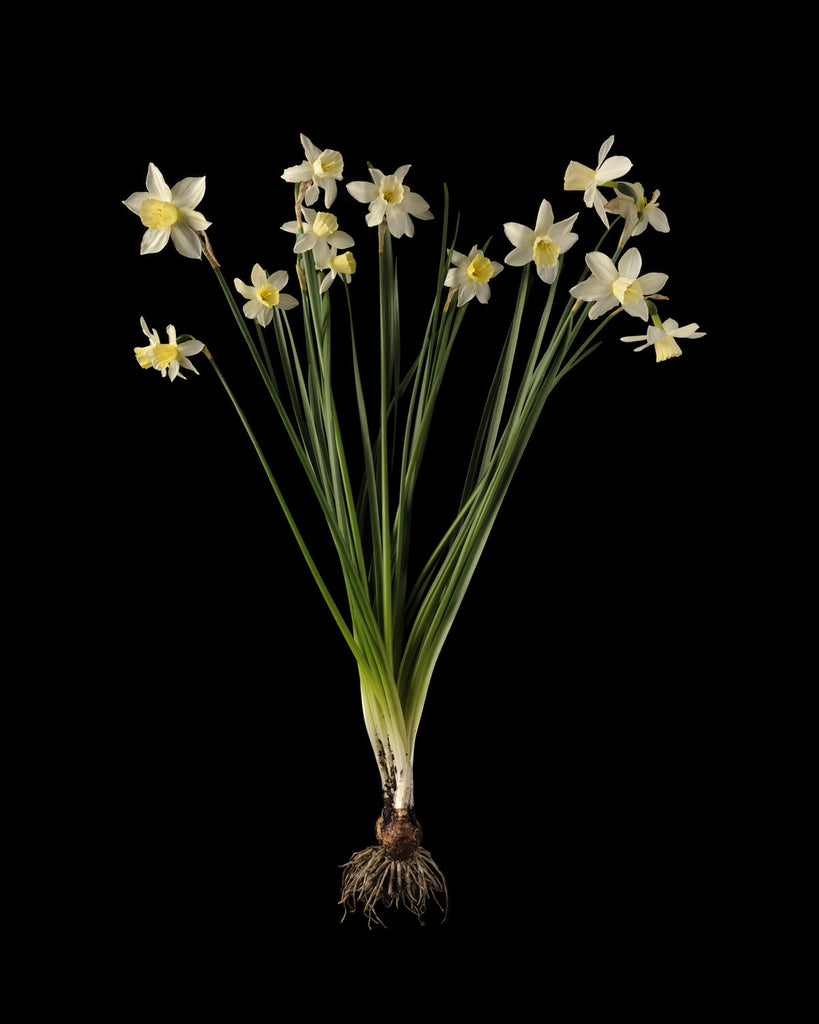 Kevin Dutton - Narcissi 1