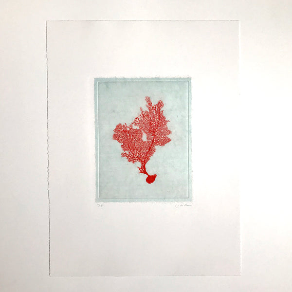 Jo de Pear - Sea Fan Etching I Red