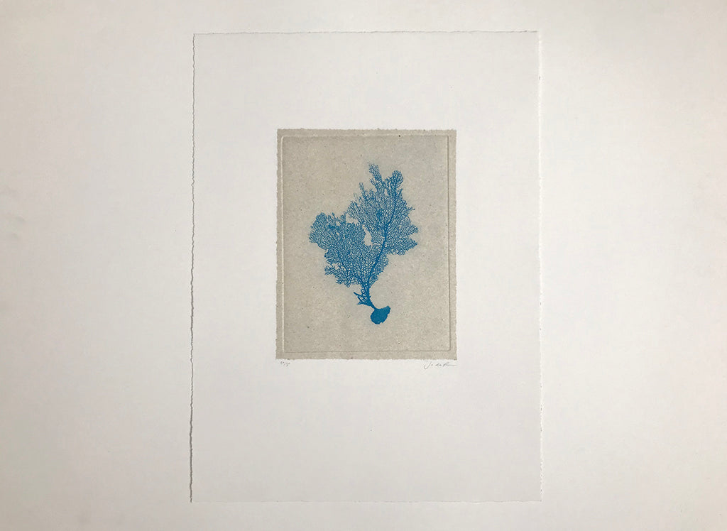 Jo de Pear - Sea Fan Etching I - Blue