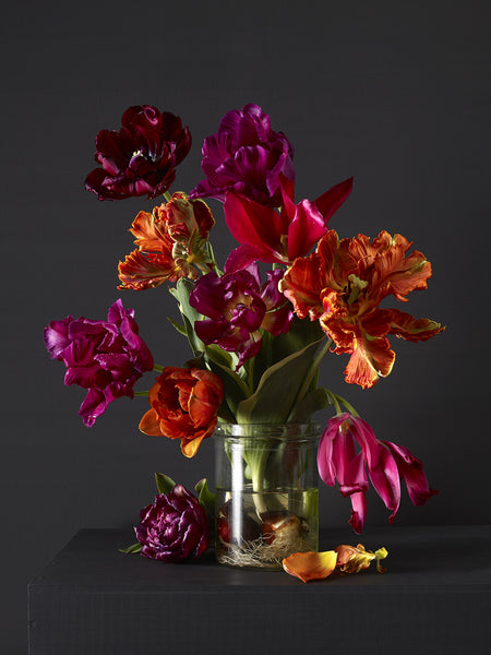 Kevin Dutton - Mixed Tulips 4