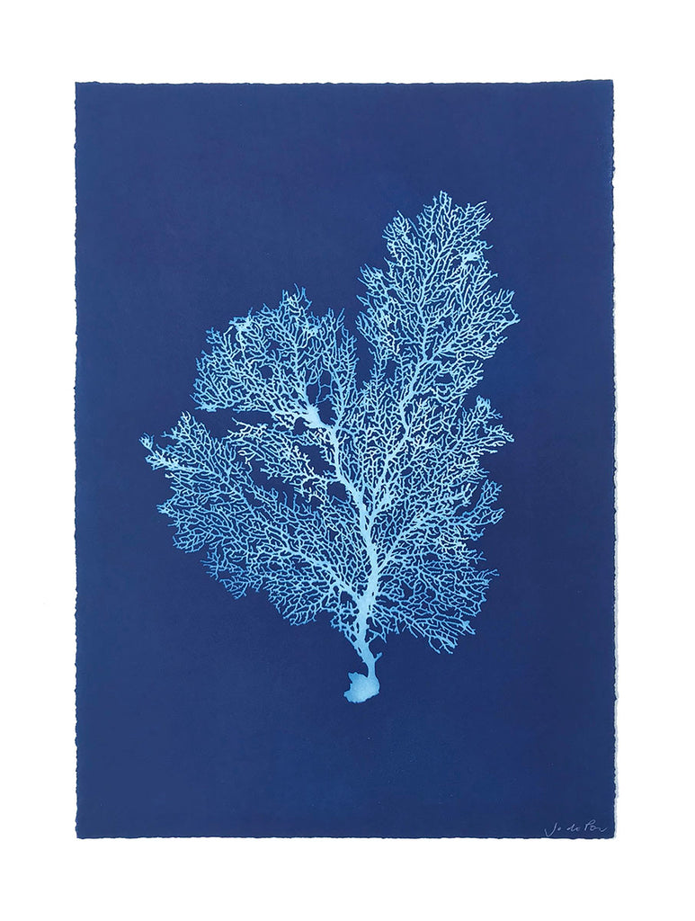Jo de Pear - Sea Fan III