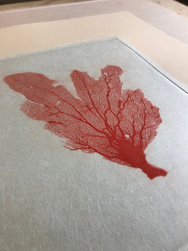 Jo de Pear - Sea Fan Etching III Red on Tan