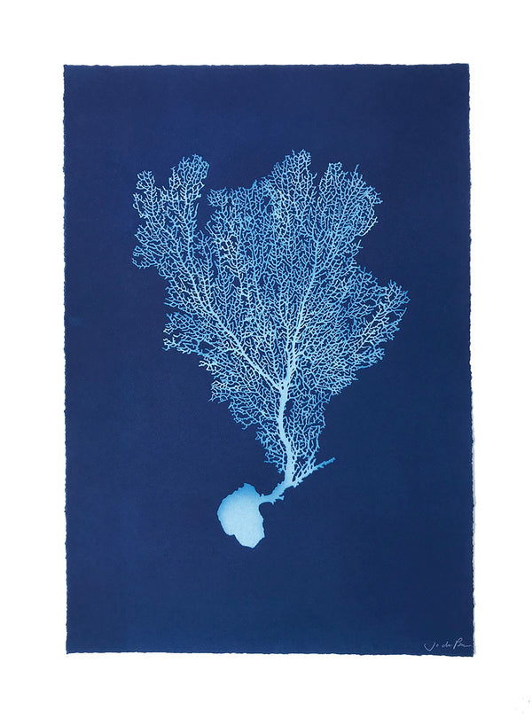 Jo de Pear - Sea Fan V