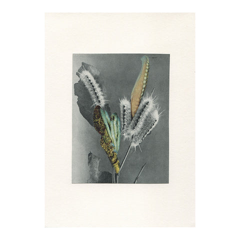 Vesna Vrdoljak - Weird Plant  - Original Collage - 2013