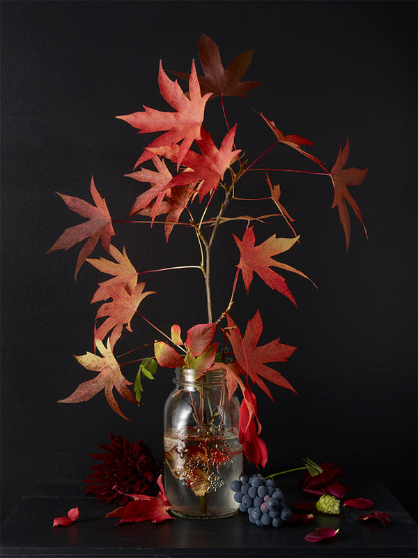Kevin Dutton - Autumn Plants #3