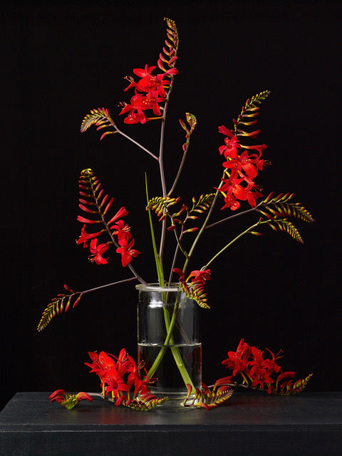 Kevin Dutton Flowers Botanical Photography