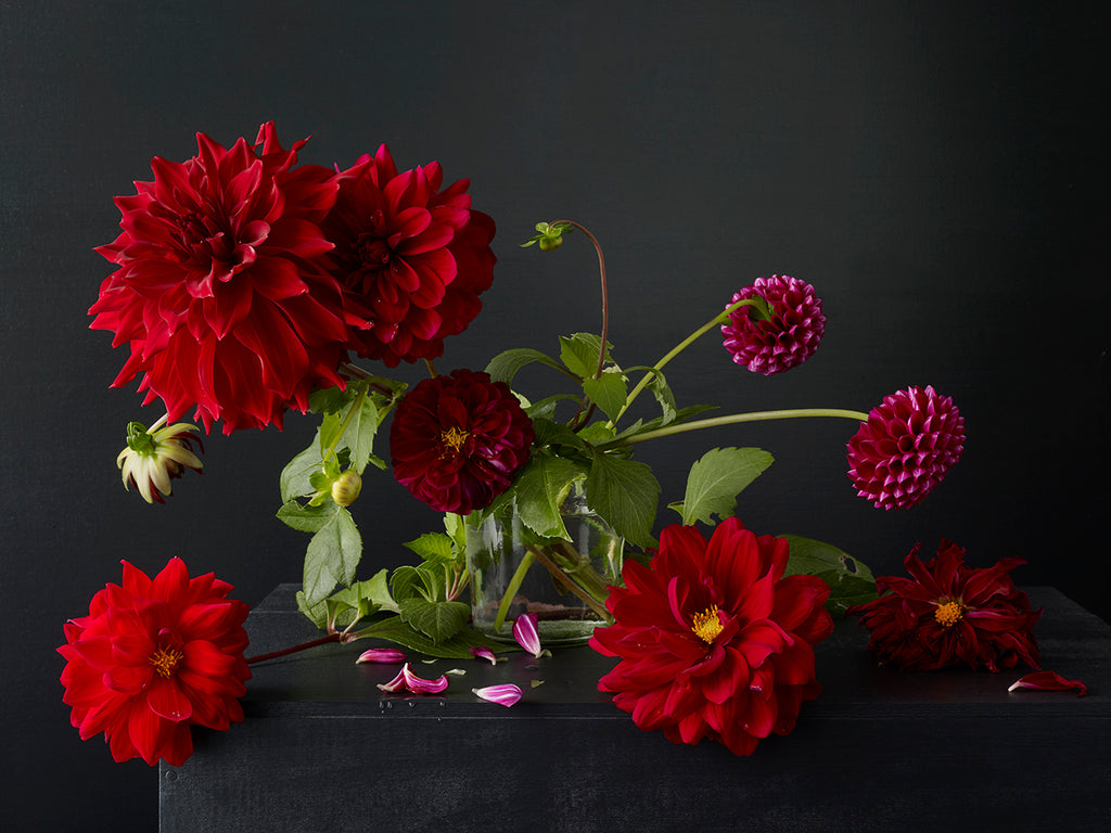 Kevin Dutton - Dahlias 2