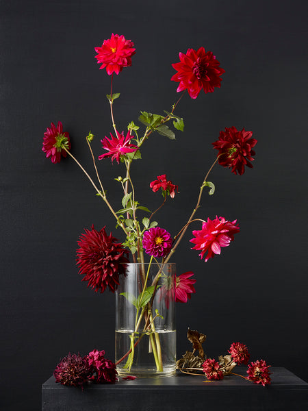 Kevin Dutton - Dahlias 4