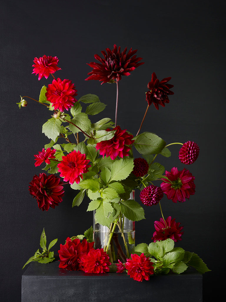 Kevin Dutton - Dahlias 5