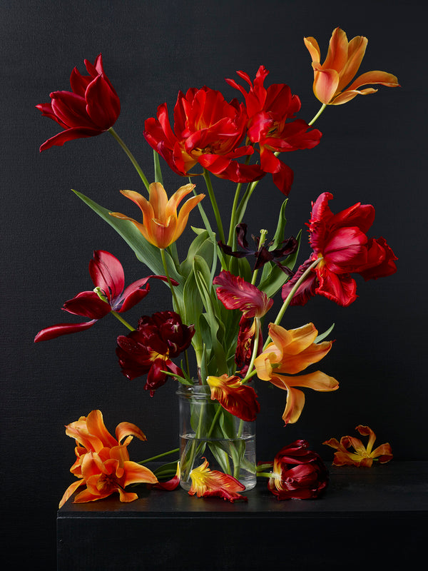 Kevin Dutton - Mixed Tulips 6