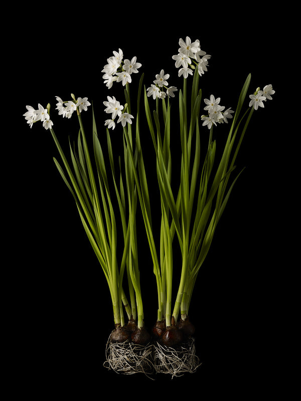 Kevin Dutton - Narcissi 6