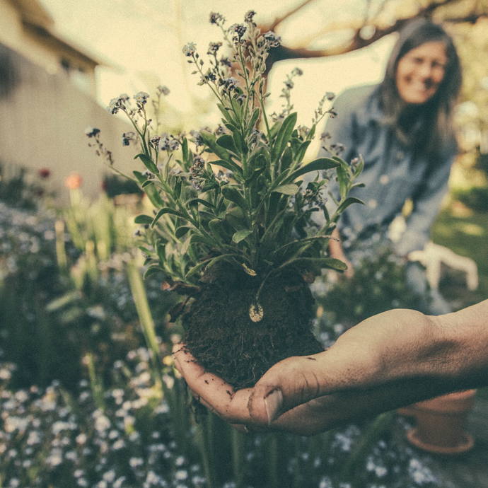 Gardening Tips That You Should Start Learning