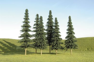 "5""-6"" Spruce Trees"