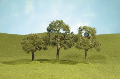 "2 1/2""-3 1/2"" Walnut Trees"