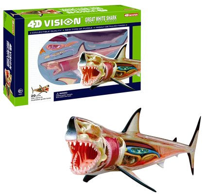 4D Great White Shark Model
