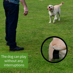 Automatic Dog Poop Collector