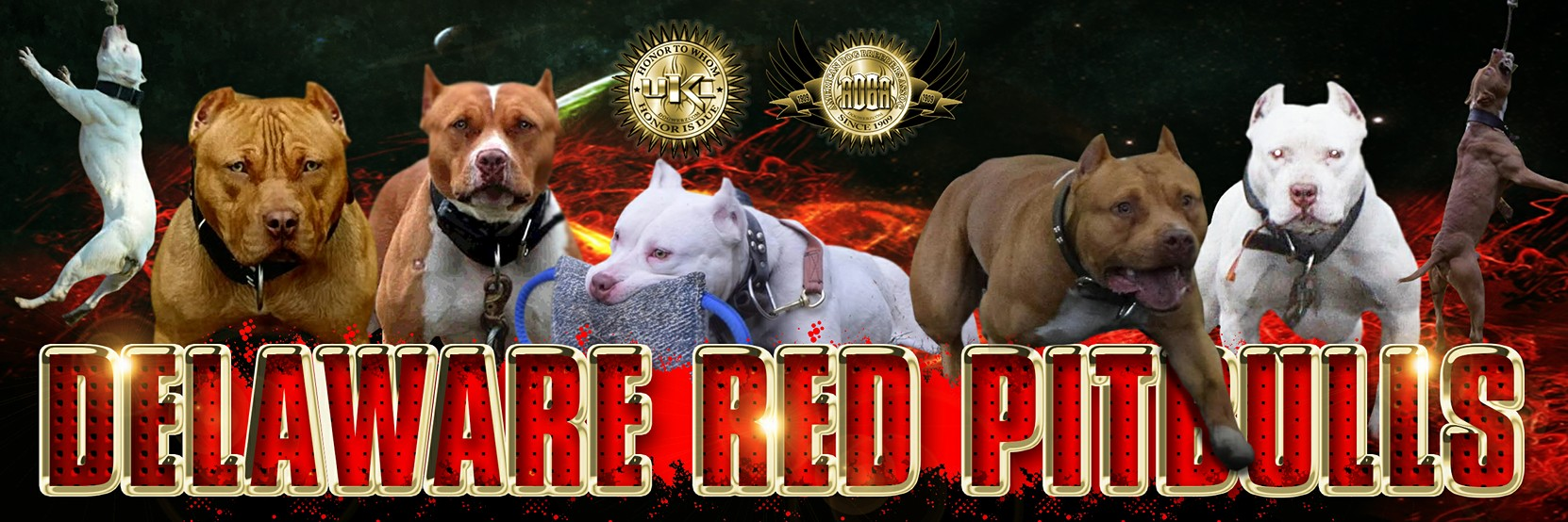Delaware Red Pitbulls, Brandy, Once Upon a Time in Hollywood