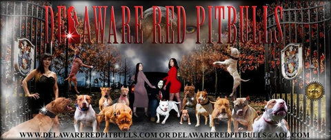 About Our Program – Delaware Red Pitbulls