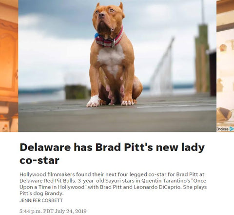 Once Upon a Time in Hollywood Brandy, movie dog, Delaware Red Pitbulls, Delaware Online, USA Today